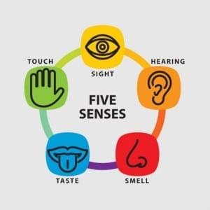 five-senses-icon-set_62147502195